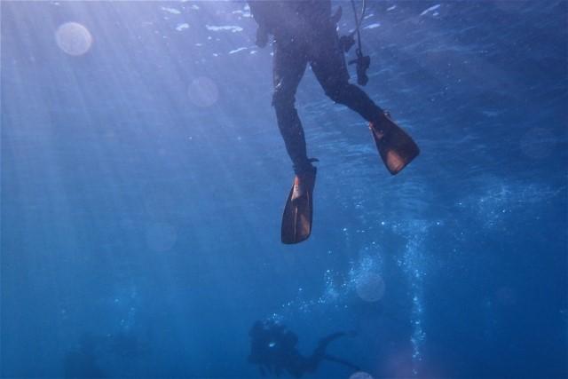 ダイビング初心者の疑問を解決!注意点やコツも紹介します